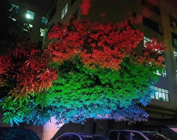 led彩虹照树灯